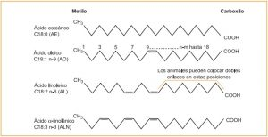 comparativa ácidos