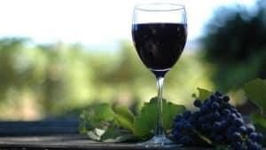 viñedos y vino